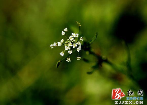 春天的花草惹人爱(组图)